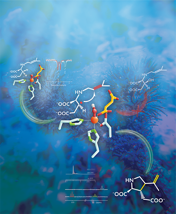 chemicals help discover mechanism behind important biosynthetic reaction